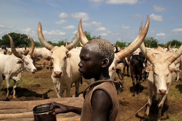 Boy stands among cattle in South Sudan. Photo Credit: Jared Ferrie/IPS