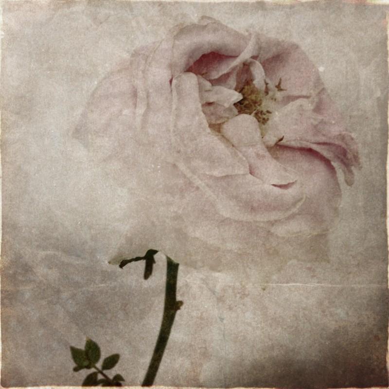Gillian Downie-Photography (@darkadrenaline9)