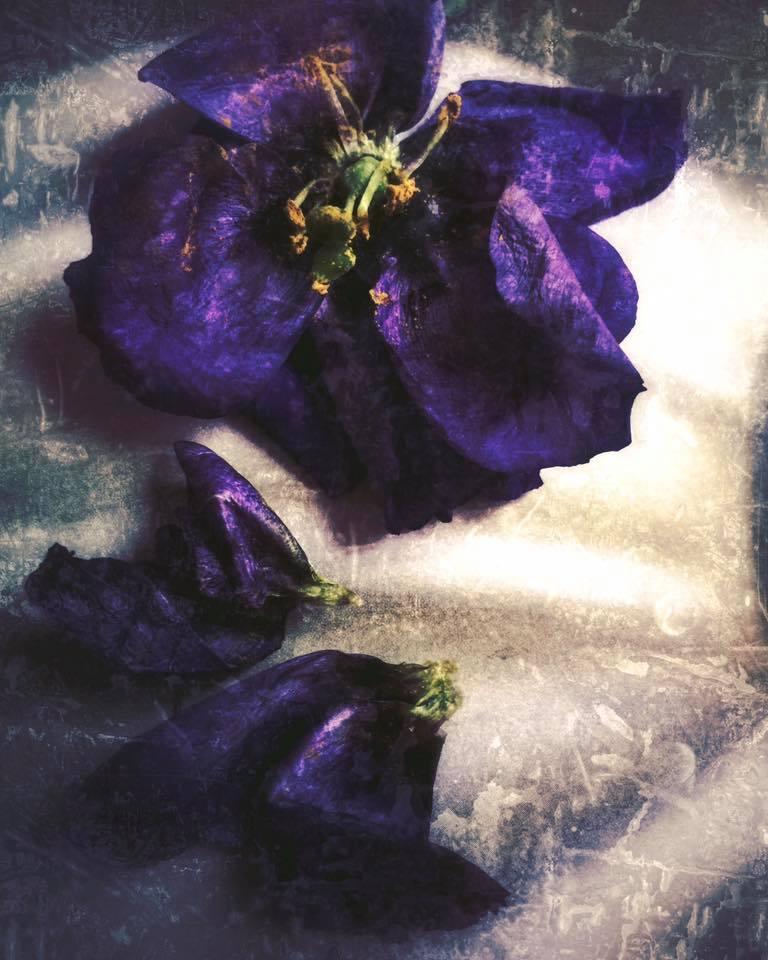 """Still life"" - Julia Badakhshan — The New Era Museum"
