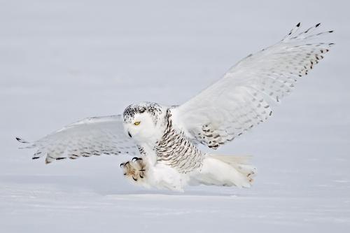 MCT Final owl