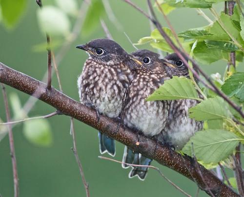 Bluebird-Brothers.jpg