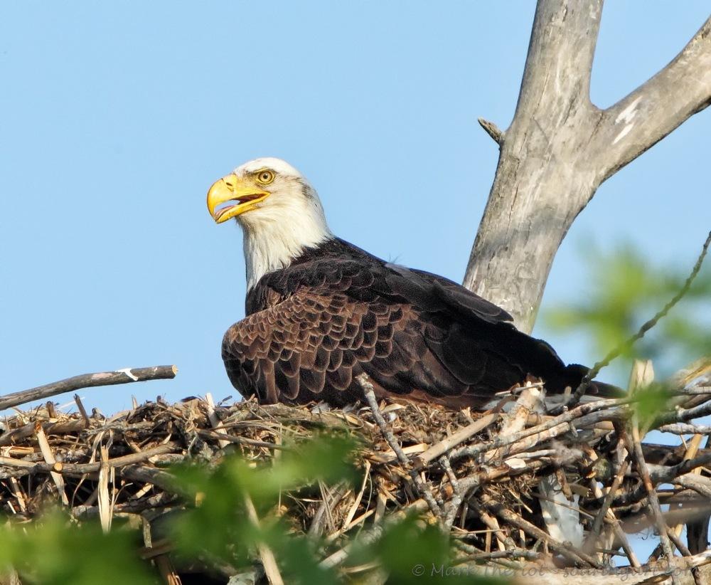 Nest Duty