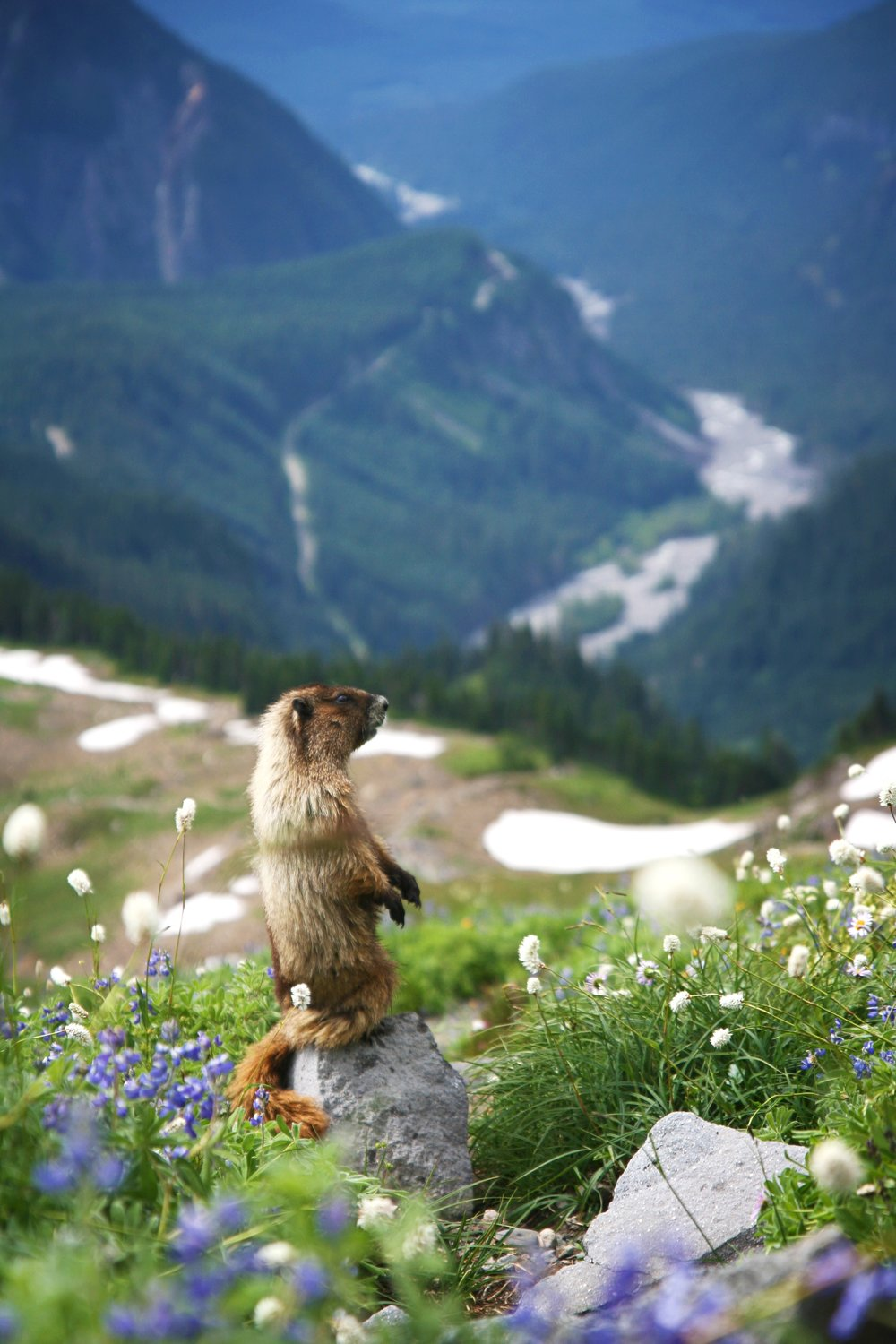 The Ultimate 64-Hour Weekend: Marmot and Jade Lakes | Backpacker
