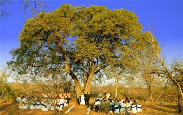 wedding ceremony under large tree, safari themed, african safari