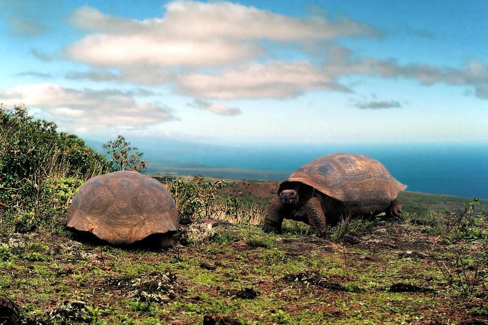ecuador-galapagos-schildpadden.jpg