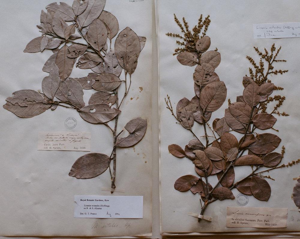 elena-heatherwick-plantae-amazonicae-8.jpg