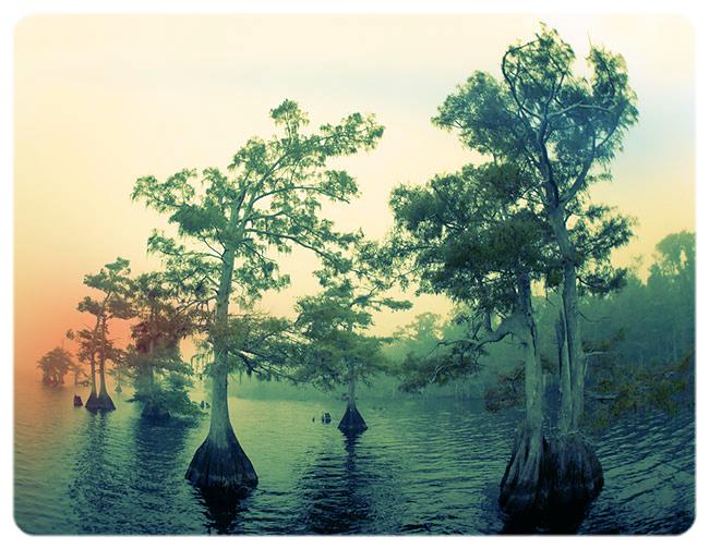 Cypress-trees-fish-eye-pinker-YL8X9674-Lake-Blue-Cypress,-Indian-River-County,-FL.jpeg