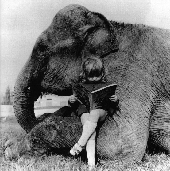 elephantandgirlread.jpeg