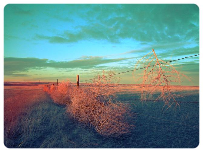 George Long - Montana Tumbleweeds.jpg