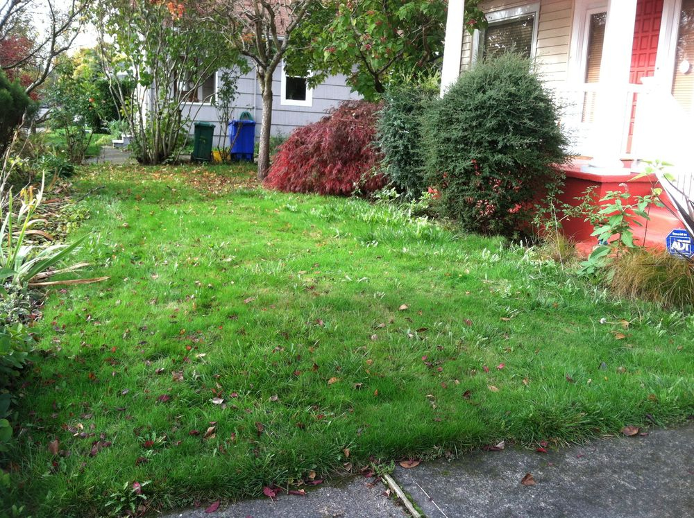 BEFORE - this yard has a bright future in my hands.