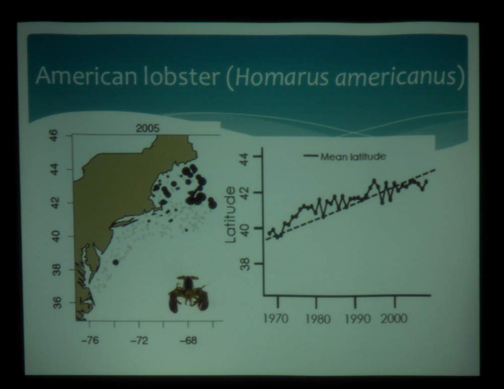One of Kristin's slides shows that the average latitude at which lobsters are found is shifting north -- likely a response to warming waters.