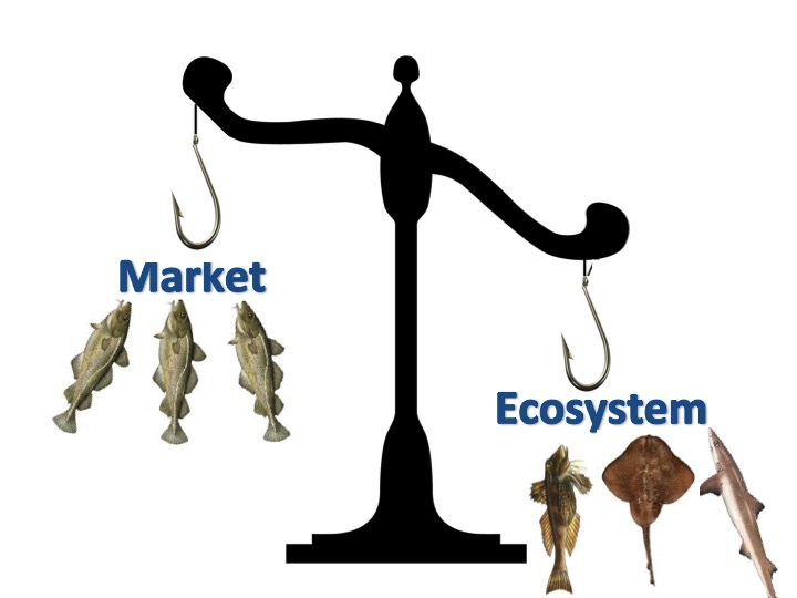 Mismatch between the ecosystem and the marketplace is common. Balancing the diversity of ecosystem production with the demand of the seafood marketplace can help.