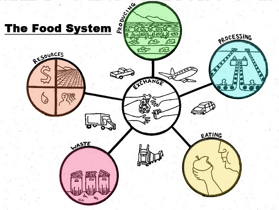 Foodsystem.jpg