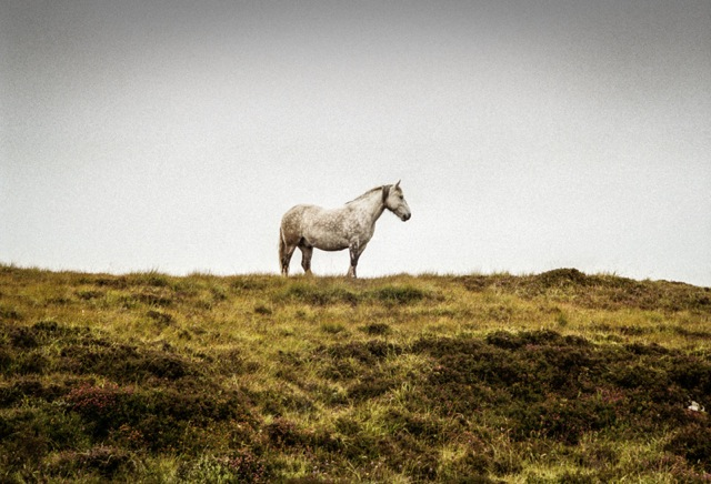 "16. ""Skye Horse"""