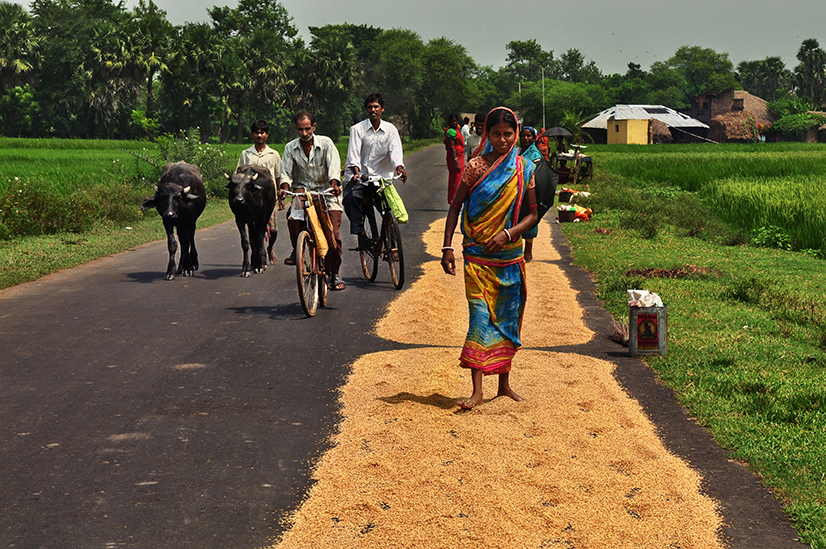 A woman in a village of West Bengal walks over rice husk to separate them (Photo: Smita Sharma).