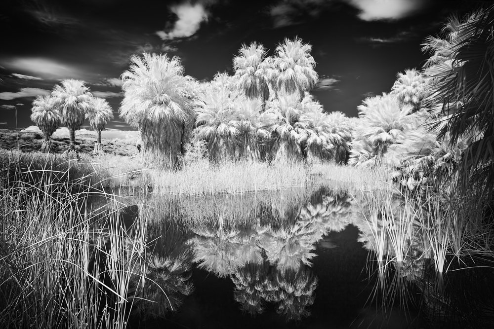 "- TONY SCHWARTZ ""Oasis II"" Arch pigmented print/infrared photoBefore devoting himself fully to photography Tony was an academic veterinary surgeon and immunologist, serving as Professor and Chair of the Surgery Department at Tufts Cummings School of Veterinary Medicine. He divides his time between Boston and Peru, has exhibited regularly in the northeast, notably at the Vermont Center for Photography, Brattleboro, VT; Bennington Museum of Art, VT; Cape Cod Museum of Art, Dennis, MA; Museum of Fine Arts Boston, MA; and the Photographic Resource Center, Boston University.  he has won numerous awards from the Boston Camera Club, New England Camera Club Conference and Santa Fe Photographic Workshops Portrait Competition among others."