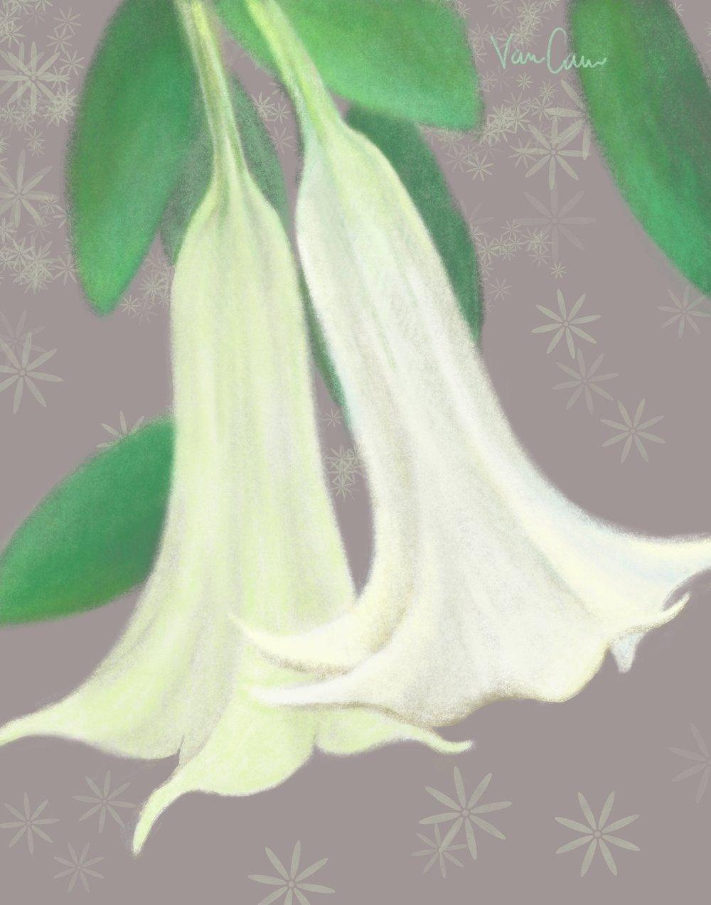 White Trumpet Tree Flowers Digital Painting