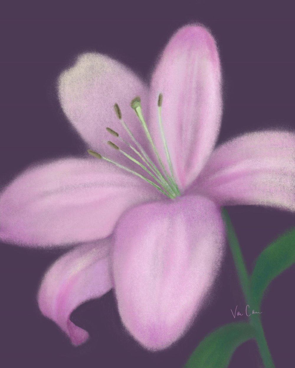 Light Purple Lily on Dark Purple Background
