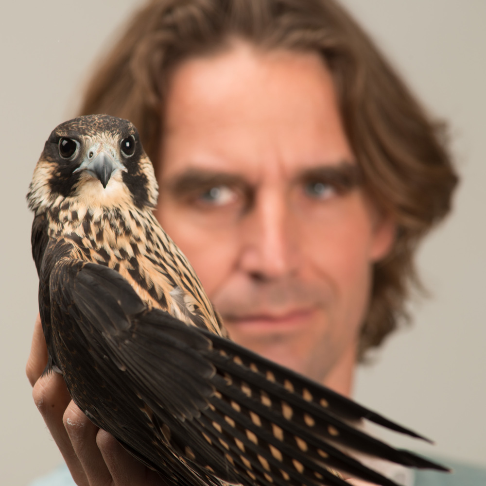 Erik Verdouw with Falcon.    Nikon D800 with 300mm AF lens f9 180/sec ISO 200 with 12mm extension.