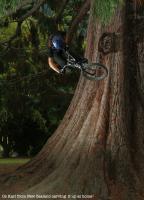 oz-karl-tree.jpg