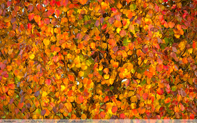 November 2012 desktop wallpaper from Stuart Sipahigil