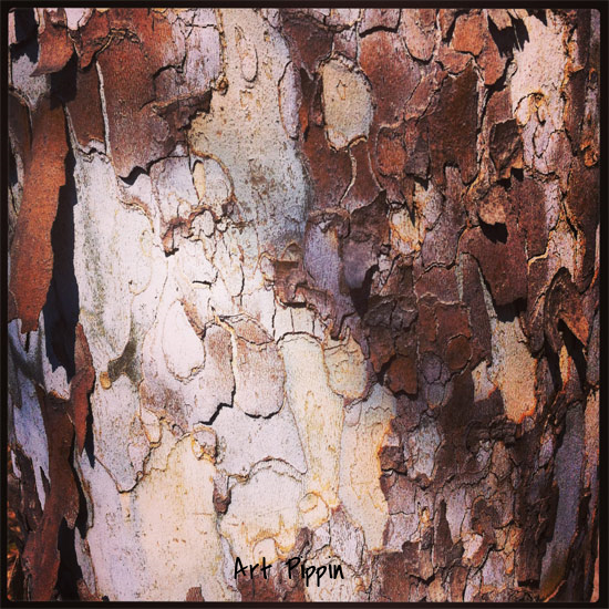 Photo of the tree bark.