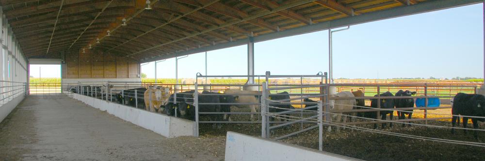 LivestockFacility.JPG