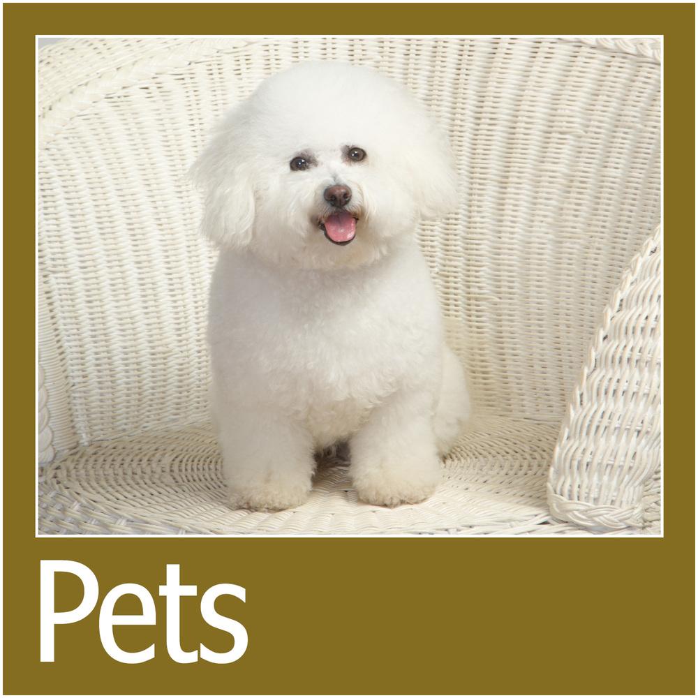 Pet Portrait Information