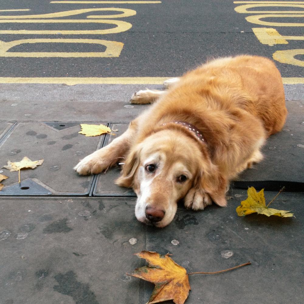 london_dog-6116.jpg