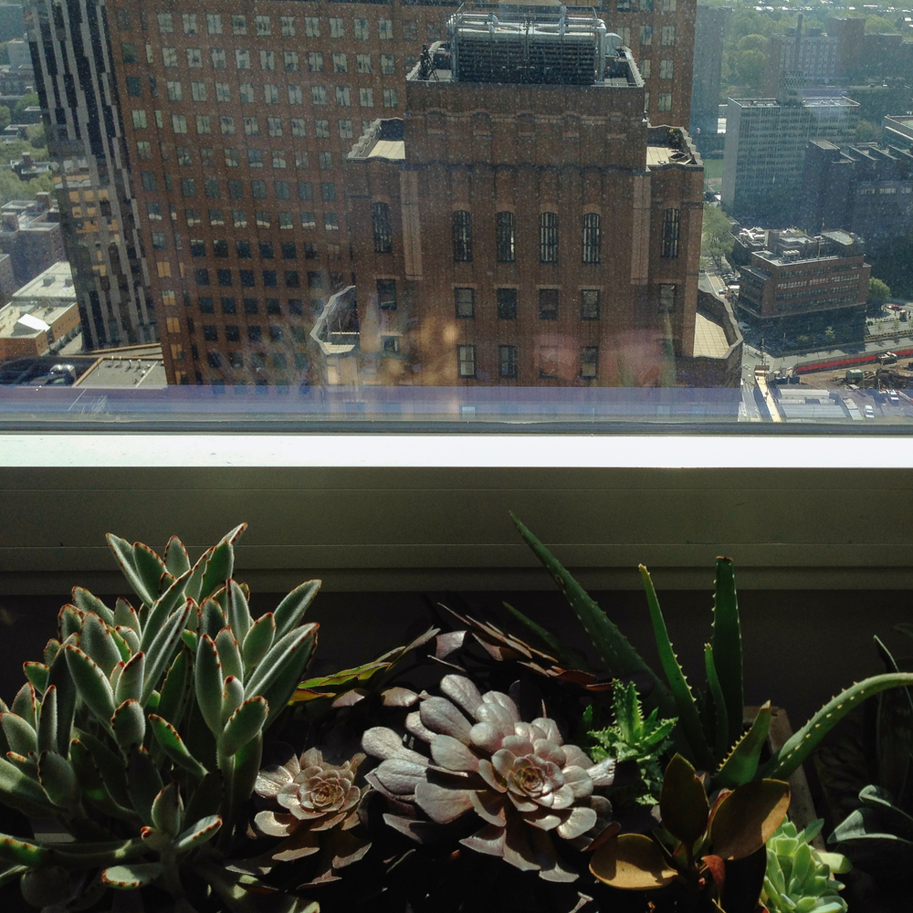BrooklyinSucculents-8785.jpg