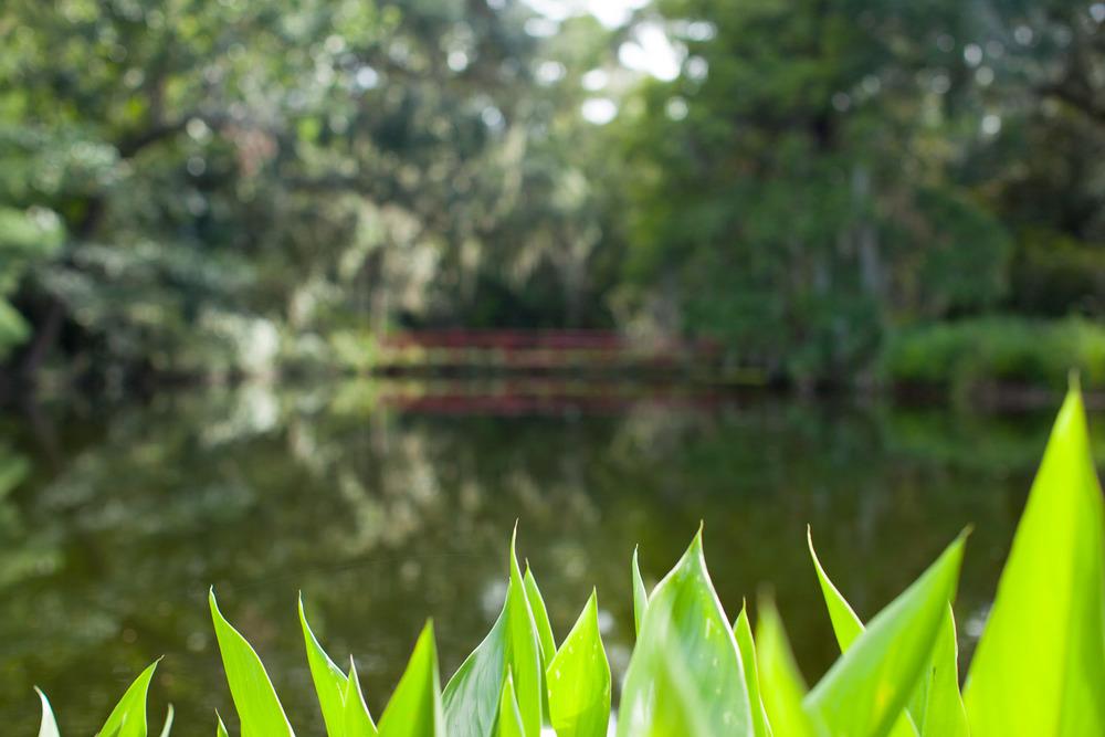 magnoliaplant-5367.jpg