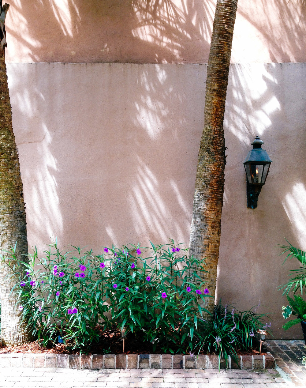 Palm_shadows-2276.jpg