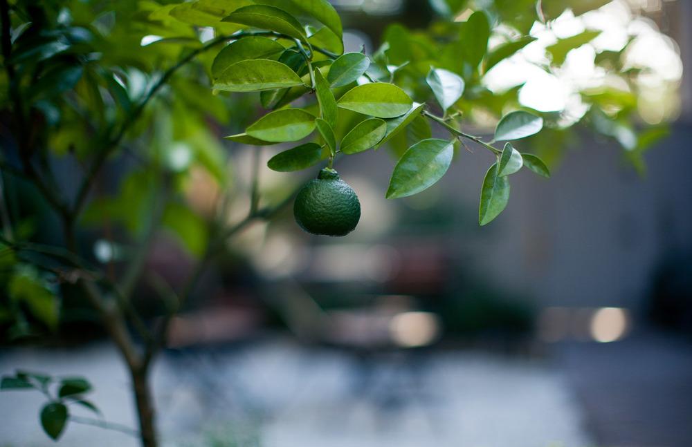 LimeEveningGalore-5453.jpg
