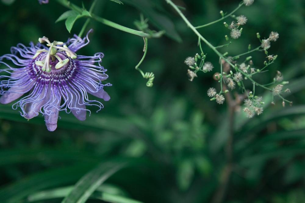 VH_Flora-5931.jpg