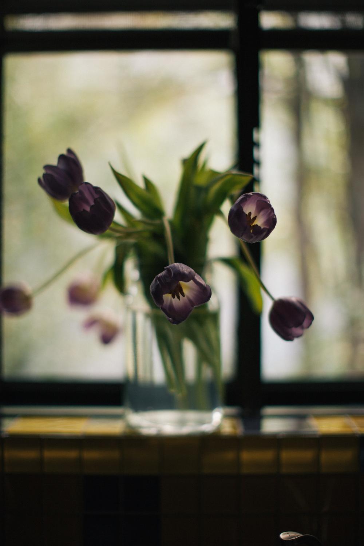 TulipsWashingDishes-6104.jpg