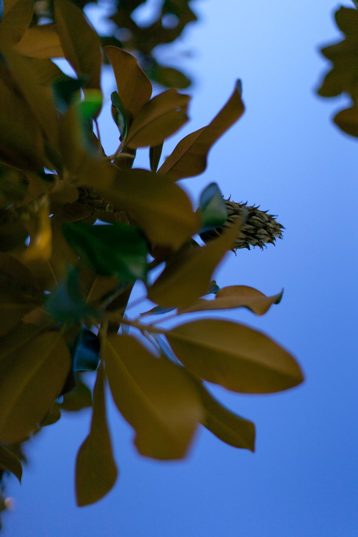 loveisallaround_magnolia-6670.jpg