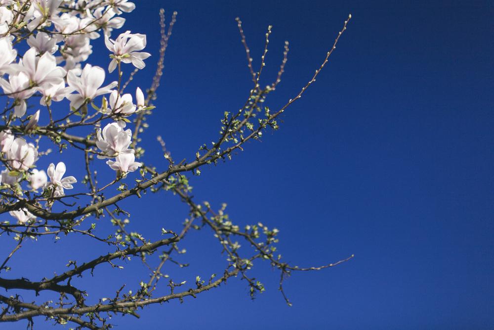 Magnolia-3222.jpg