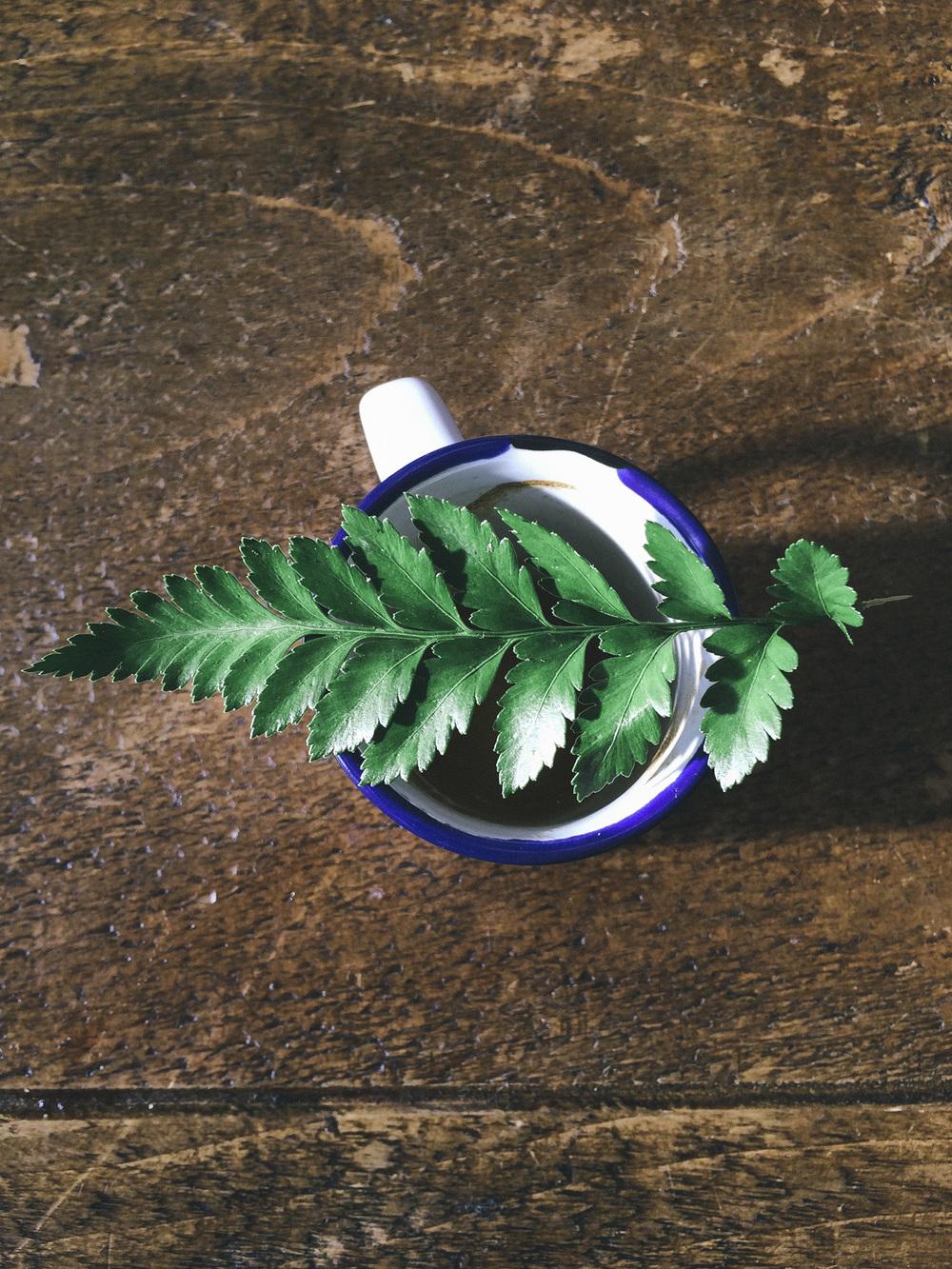 coffee_flora-2.jpg