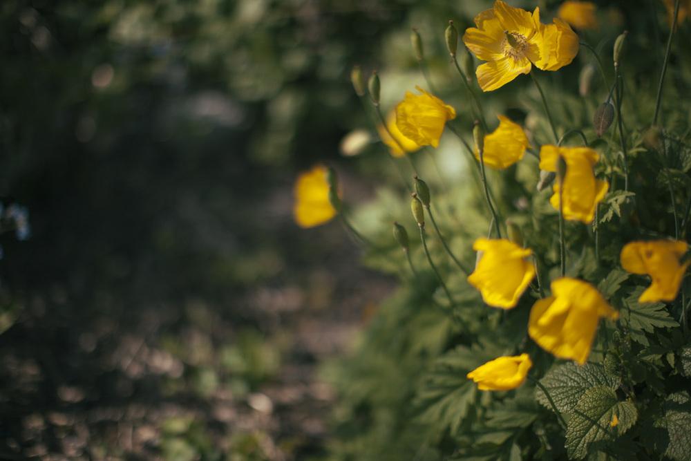 yellow-4630.jpg