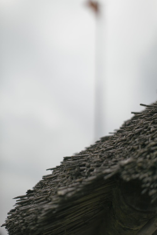 Greyone-5517.jpg
