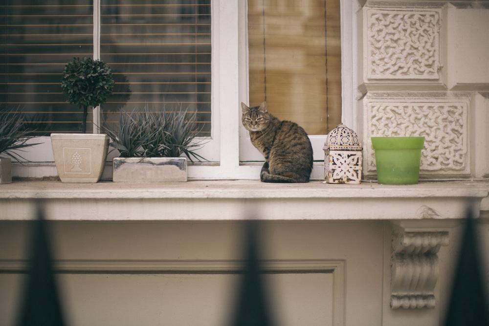 catlife-2.jpg