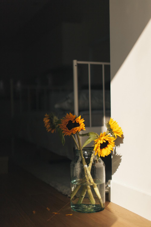 sunflower_porta.jpg