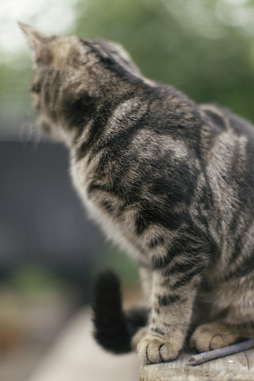 catslife_tail.jpg