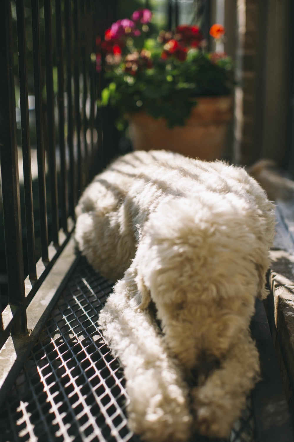 I let the dog out-4.jpg