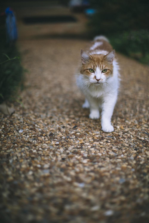 Cat Got Moves-2.jpg