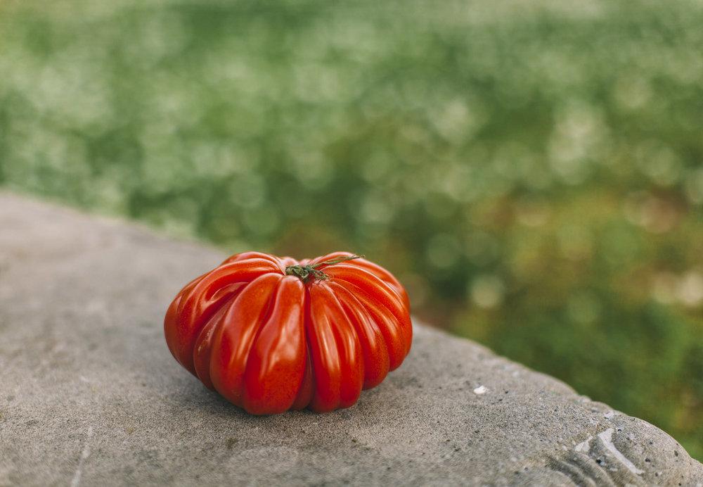 Hearty Tomato-2.jpg