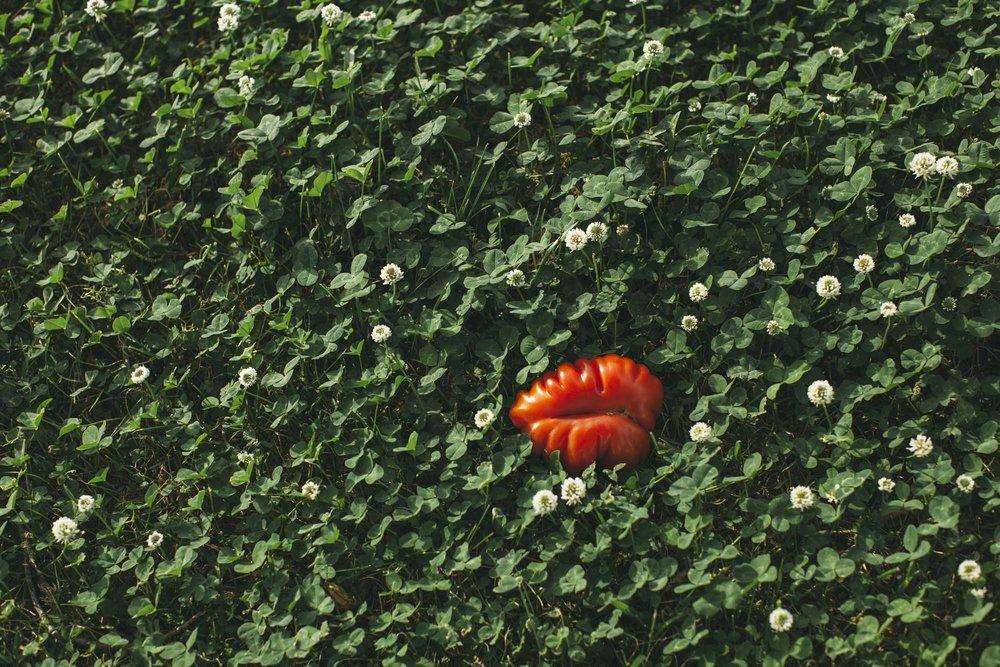 Hearty Tomato-4.jpg