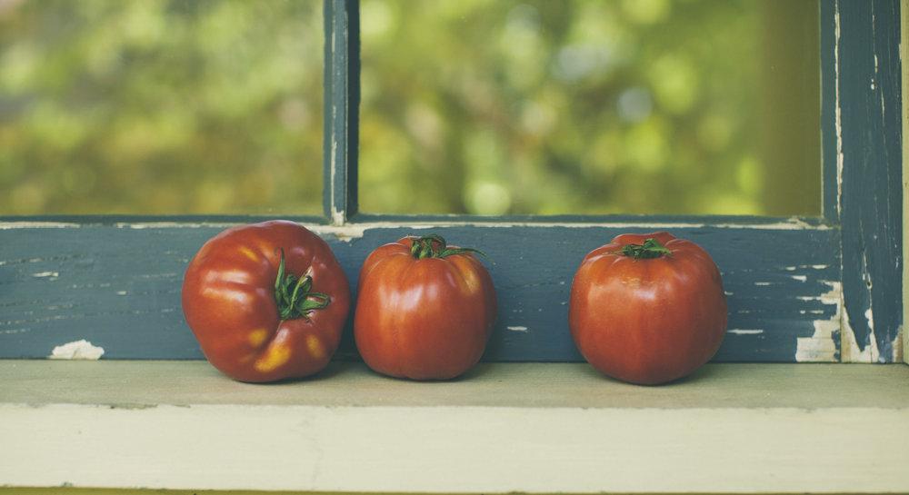 Window Tomatoes 2-9396.jpg
