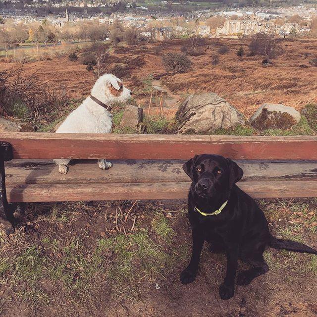 Having a quick rest #Ilkley #parsonrussellterrier #labrador #labradoodlesofinstagram #doggystyles #dogsofinstagram #dogwalking #dogsitting #dogphotography #yorkshire