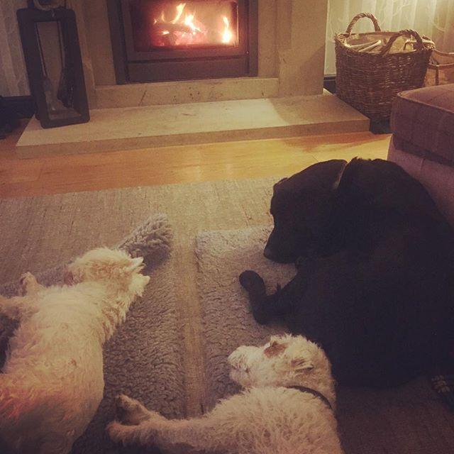 Dog bliss #Elle #Sid #Rosie #cosy #dogbliss #parsonrussellterrier #lab #westiesofinstagram #westie #dogphotography #dogs #ilkley